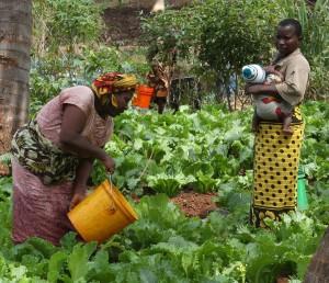 Maza Wanawake Kwanza Growers Association 3