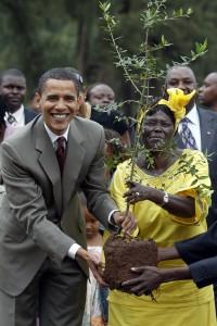 KENYA, Nairobi : Then-Senator Barack Obama plants a tree with Wangari Maathai during a ceremony in Nairobi, Kenya, on August 28, 2006. AFP Photo: Simon Maina