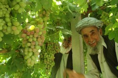 Two farmers in Afghanistan. Photo Credit: USAID/Afghanistan