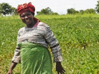 Azaratu Fushieni walks through her soy field. She has benefited from the assistance of a Feed the Future project, which helped her improve her agricultural practices and use better inputs. Photo credit: Elisa Walton, USAID