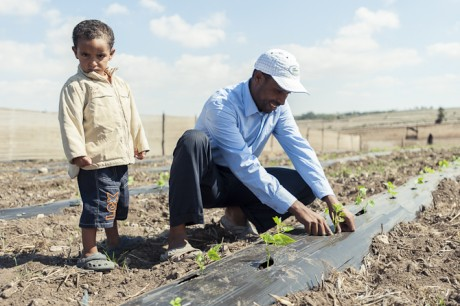 A Moroccan farmer makes use of a USAID SMS advisory service to plan irrigation for his crops. Photo credit: USAID