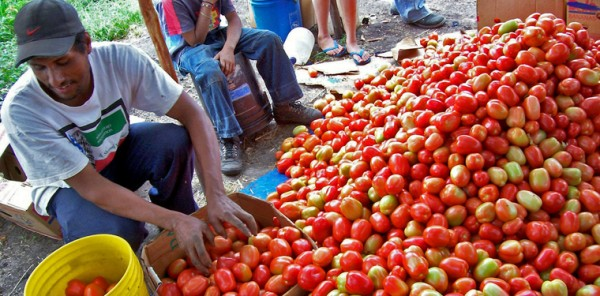 Honduras: Improved Agricultural Diversification Assist in Econom