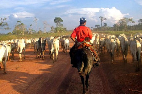 Imazon has trained Brazilian cattle farmers to use their pastures more efficiently, reducing the need to cut down trees to clear land. Photo credit: Lou Gold/Flickr