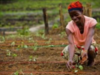 Woman in Liberia tends to her plants. Photo credit: Morgana Wingard/ONE