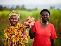Smallholder farmers with their harvest - sweet potatoes. Photo by Fintrac Inc.