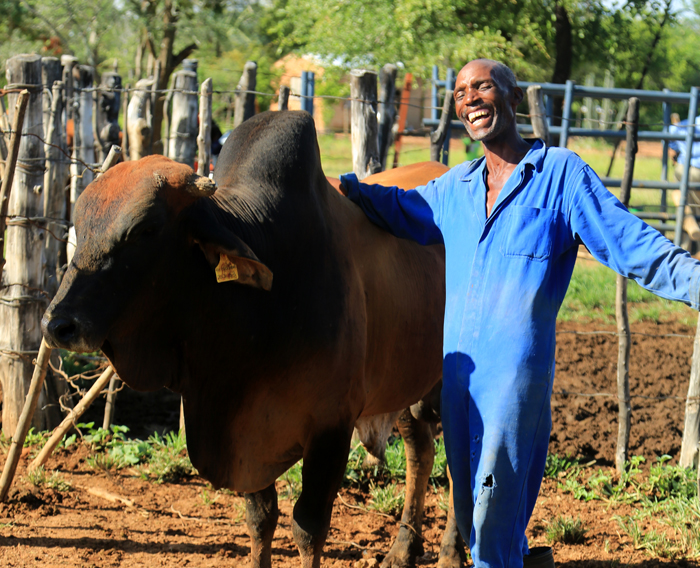 Sydney Msimanga proudly shows off one of the bulls he purchased with a loan he received from a credit program set up by USAID in Zimbabwe. / Fintrac Inc.
