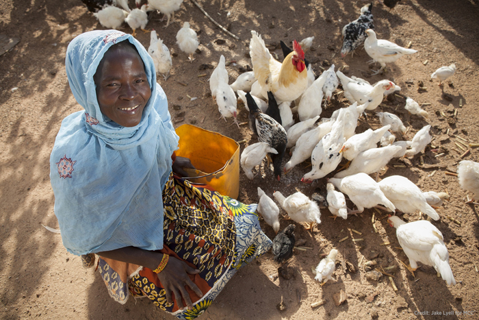Salimata Sagnol feeds her chickens outside their coop in the village of Tengréla, Burkina Faso. A U.S. Millennium Challenge Corporation program funded a package of agricultural trainings along with construction materials for her chicken coop and ongoing technical support for Sagnol and other rural farmers like her. /Jake Lyell