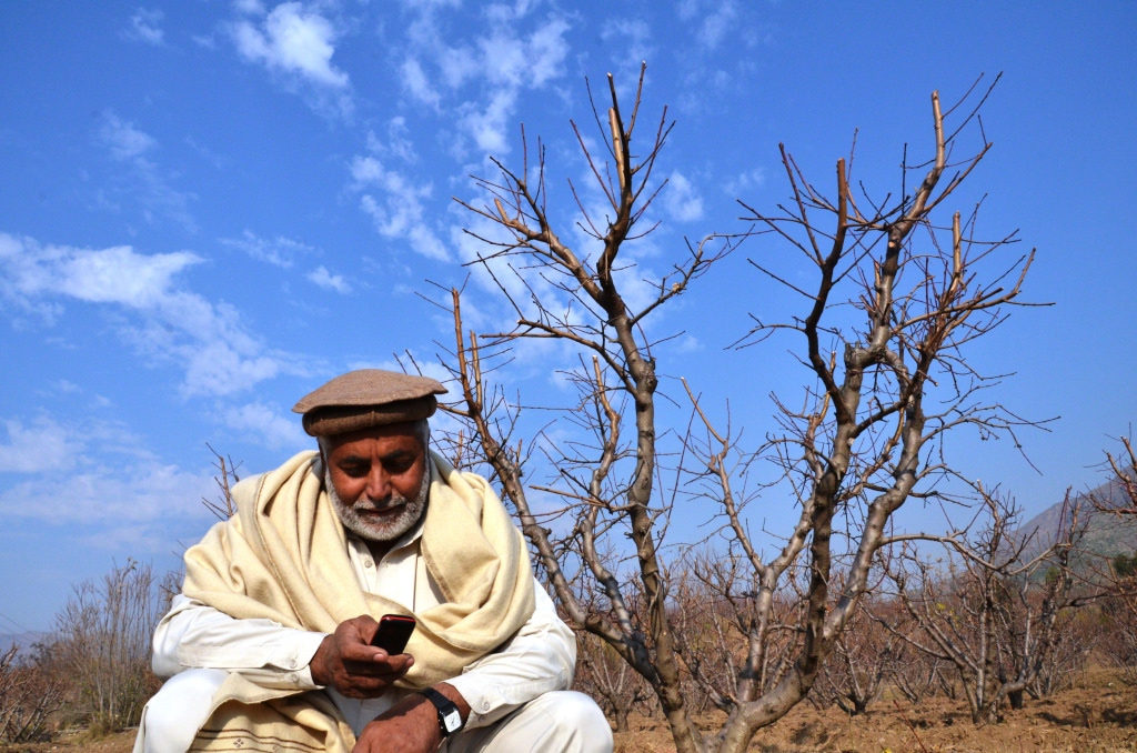 A farmer participating in the USAID pilot program is reading a text alert on best farming practice. / USAID/Pakistan