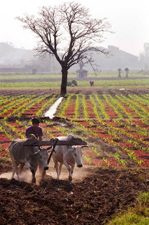 A farmer ploughs his field in a village in West Bengal, India. The Securing Water for Food Grand Challenge for Development is helping harness ideas that have the potential to enable developing world farmers to grow more food with less water, or to make more water available for agriculture.