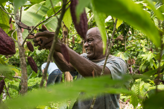 Crops like cacao can help forest-dependent people earn more using less land, improving livelihoods and conserving forests. / Hanz Rippe