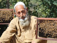 Fazal Wahid, 66, a bee farmer in Pakistan's turbulent SWAT region is now able to sustain his family because of assistance from a USAID program. The economy in Pakistan's Swat Region was devastated by militants and devastating floods. / USAID, Pakistan