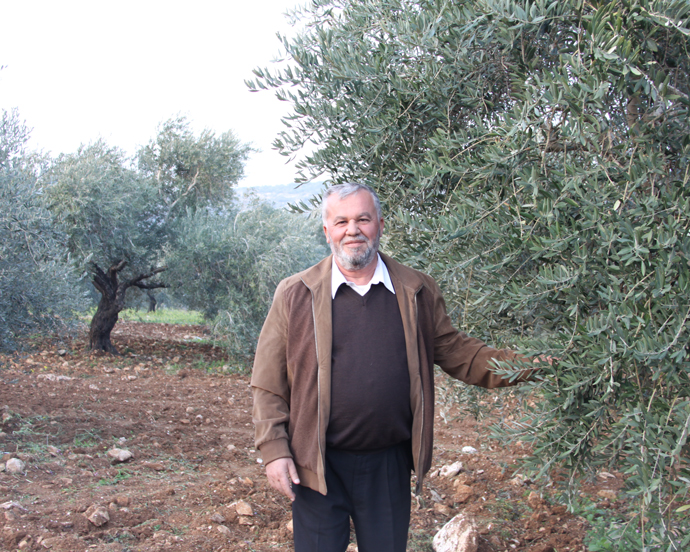 Qussay Hamadneh improved the quality of the olive oil he produces with support from the Olive Oil Without Borders project. / Lubna Rifi, USAID