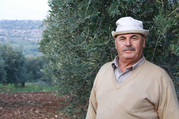 Muhammad Shouly is an olive farmer who tripled his harvest  after learning about supplementary irrigation techniques through the Olive Oil Without Borders project. / Lubna Rifi, USAID