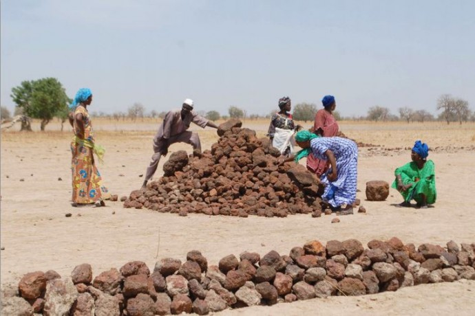 In Senegal's Tambacounda region, farmers face a growing risk of droughts and floods as familiar rain patterns change. Building stone bunds protects rice fields from silting and improves production. / Carla De Gregorio