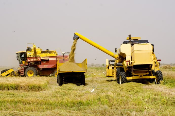 USAID is partnering with Senegalese firms throughout the rice value chain to scale up rice production through improvements in processing capacities, storage facilities and modernized harvesting equipment. / USAID/Senegal.