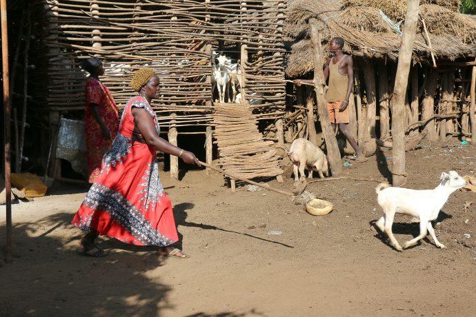 Lokibeyia Livestock Group Chairwoman Rachel Akol herds one of her many goats.