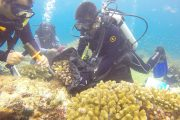 A group of SCUBA divers examines a coral reef